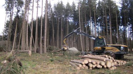 Bei der Waldarbeit lauern für Laien durchaus Gefahren. Vor diesen warnt nun die Berufsgenossenschaft vor dem Hintergrund, dass viele Kurzarbeiter sich nun als ungelernte Waldarbeiter versuchen.