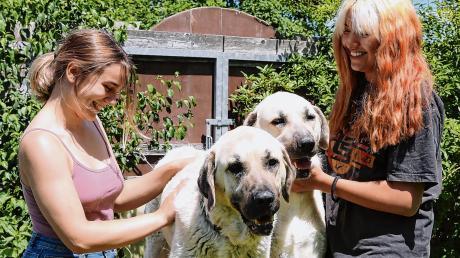 Vier, die sich ganz offensichtlich richtig gut verstehen: Elisabeth Leiß (links) und Lavinia Weber kümmern sich im Tierheim Beckstetten um Aras und Artesch, zwei türkische Kangals, Herdenschutzhunde also.