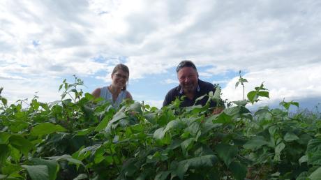 Rebecca Schweiß, Projektmanagerin der Ökomodellregion Günztal, und Konrad Specht präsentieren die Schwarzen Bohnen, die der Biobauer auf einem Feld bei Oberkammlach versuchsweise angebaut hat.