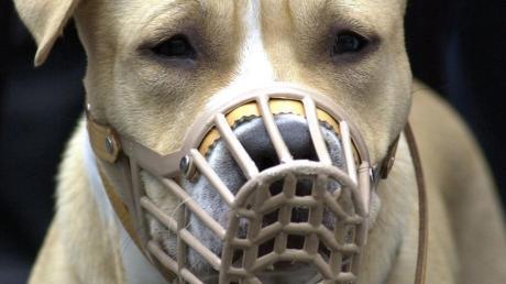 Stadtbergen will die Steuer für Listenhunde auf 600 Euro erhöhen. Die betroffenen Halter wehren sich erfolgreich mit einer Petition dagegen.