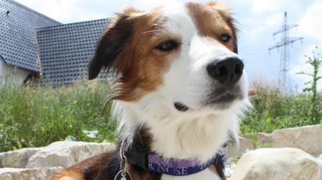 Wer einen Hund hat, der muss Hundesteuer bezahlen. Wie viel, entscheidet die jeweilige Gemeinde. In Langenneufnach müssen die Halter von Kampfhunden bald tiefer in die Tasche greifen.