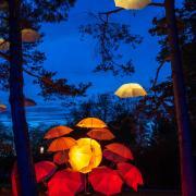 Auch die MZ-Leser sind vom Kurpark-Leuchten begeistert. Dieser tolle Schnappschuss gelang Stefanie Künnecke aus Walleshausen.
