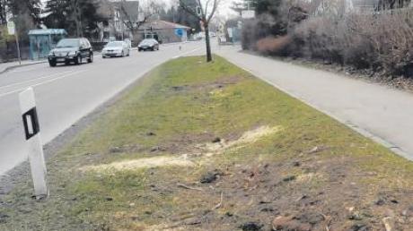 Mehrere Pfaffenhofener vermissen zwei Spitzahorne an der Hauptstraße. Weil ein Schnitt misslang, müssen nun neue Bäume gepflanzt werden.
