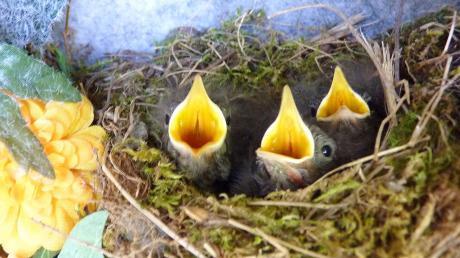 Vogelnest.jpg