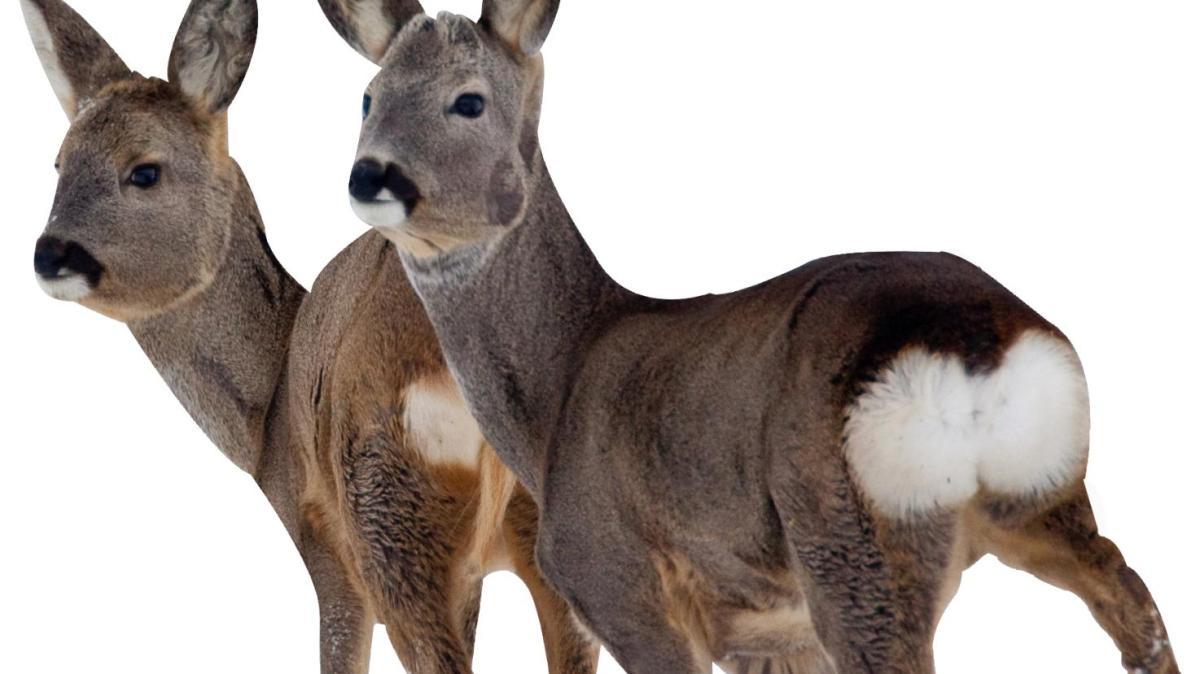 Wild und hund bekanntschaften