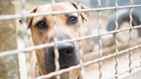Immer wieder gibt es Beschwerden über die Hundezucht in Neuburg.