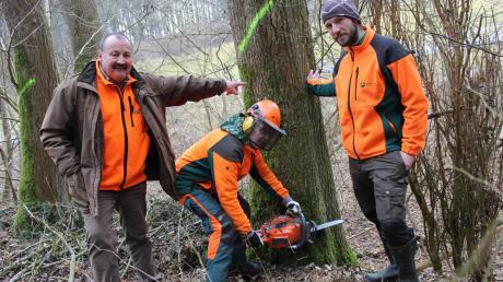 Helmut Baumhauer, stellvertretender Leiter des Forstbetriebs Weißenhorn (links), und Manfred Rolle, Revierleiter Biberachzell (rechts), zeigen, wo der Schädling zwischen Biberberg und Autenried im Wald gewütet hat. Ein Waldarbeiter setzt fürs Foto schon einmal die Kettensäge an.