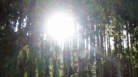 Die Forstbetriebsgemeinschaft betreut Waldbesitzer im Kreis.