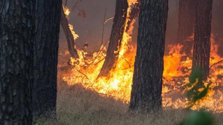 Ein junger Tramper hat in Russland aus Frust einen Wald angezündet.