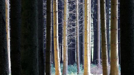Der BUND hat durchgesetzt, dass Bäume in Blaustein in diesem Jahr nicht gefällt werden dürfen.