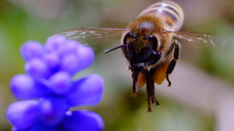 Das Volksbegehren hat gezeigt: Mehr Blumenwiesen sind nötig, damit Hummeln, Bienen und Schmetterlinge wieder Nahrung finden. Aber nicht jeder hat einen Garten. Eine Landwirtin bietet deshalb Blühpatenschaften im Landkreis an.