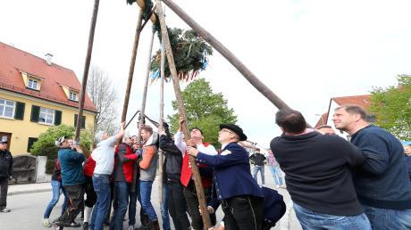 Inwiefern dürfen im Kreis Neu-Ulm Maibäume aufgestellt werden? Das Landratsamt Neu-Ulm erklärt die aktuelle Regelung.