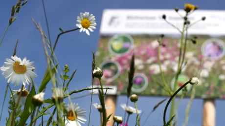 Ein Projekt des Gerlenhofener Arbeitskreis Umweltschutz, der Stadt Neu-Ulm und acht Landwirten ermöglicht Lebensraum für Bienen und Insekten auf einer Ackerfläche, die insgesamt so groß ist wie etwa 28 Fußballfelder.