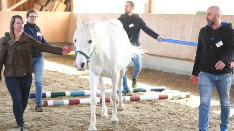 Lässt Mara sich weiterhin in der Mitte der Gruppe über die Hindernisse führen oder sucht er sich lieber seinen eigenen Weg? Bei dieser Aufgabe im pferdegestützten Training in Roggenburg ist Teamarbeit gefragt.