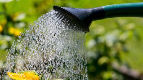 Obst und Gemüse sollten zurzeit nur mit Trinkwasser gegossen werden, rät das Landratsamt Neu-Ulm.