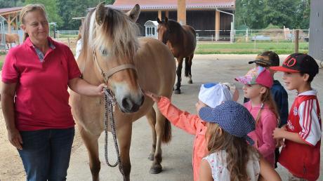 Pferdehof-Besitzerin Tanja Ölberger zeigt den Kindern aus dem Kindergarten St. Martin ihren Pferdehof bei einem Aktionstag des BBV. Die Kleinen dürfen auch mal Pferd Chill streicheln.