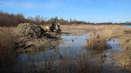Eine neue Flachwasserzone am Natursee soll Fischen beim Ablaichen helfen und Vögeln bei der Nahrungssuche.