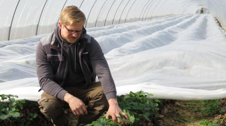 Obstbauer Johannes Gutmann aus Nersingen betrachtet, wie die Pflanzen in seinem Gewächstunnel gedeihen. Doch er hat Sorgen: Die Reisebeschränkungen, die auch für Saisonarbeiter gelten, könnten die Ernte in Gefahr bringen.