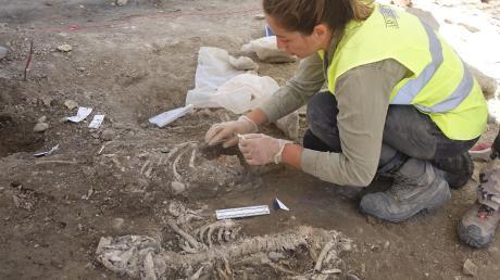 In vier bis sechs Schichten fanden die Archäologen am Dreifaltigkeitshof in Ulm bislang Bestattungen. Von etwa tausend an dieser Stelle begrabenen Menschen geht Jonathan Scheschkewitz vom Landesamt für Denkmalpflege aus.