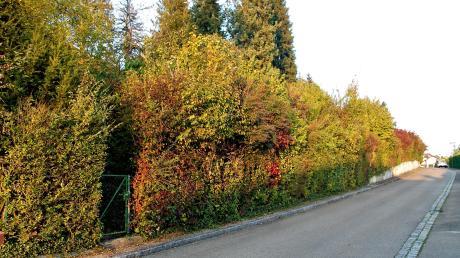 An der Spitalgartenstraße in Oberelchingen könnte eine Mehrgenerationen-Wohnanlage entstehen.