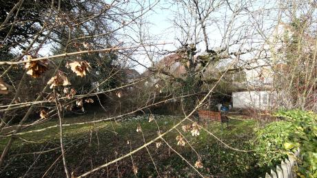 Am Maienweg in Ulm-Söflingen müssen Büsche und alte Bäume weichen.