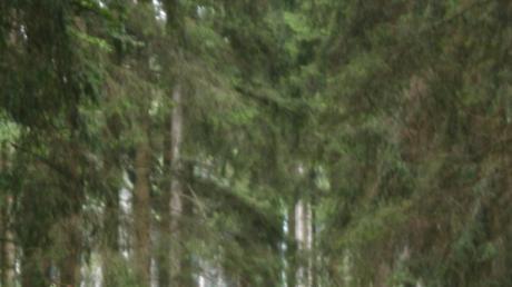 Wälder haben vielfältige Schutz-, Nutz- und Erholungsfunktionen sowie eine große Bedeutung für die biologische Vielfalt. Meist erfüllen die einzelnen Waldgebiete mehrere Funktionen gleichzeitig.