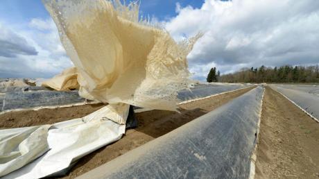 Bilder wie diese hat es vergangene Woche während des Sturmtiefs vielerorts gegeben. Die Folien, die die Spargelbifänge abdecken, konnten mitunter den starken Windböen nicht standhalten. Nicht so schlimm, wie manche Spargelbauern fanden.
