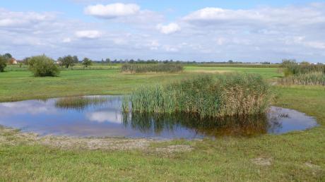 Um Moorverlust zu verhindern fordert die Fridays for Future-Gruppe aus Neuburg weniger Landwirtschaft im Donaumoos.