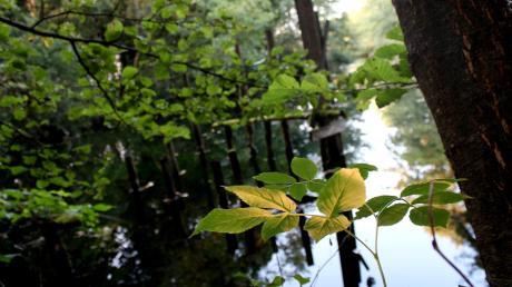 Versteckt zwischen Bäumen, Büschen und Süßgräsern: Die Gleßbrunnen bei Wolkertshausen sind sagenumwobener Schauplatz und eindrucksvolles Naturidyll gleichermaßen.