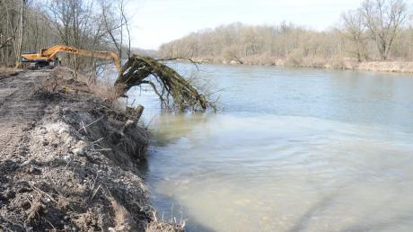 Im Vordergrund sieht man die Buhne. Der alte Baum bleibt ebenfalls stehen. Weiter donauaufwärts bleiben 150 Meter Ufer unberührt, um einen Durchstich des Stroms zur Friedberger Ach zu vermeiden.