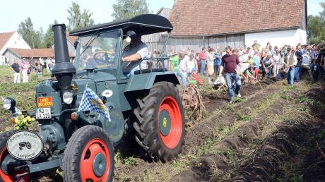 Auf dem Kartoffelfest dürfen sich die Besucher ihre eigenen Kartoffeln klauben und mit nach Hause nehmen.