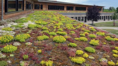 Mit solchen Ministauden wird das Dach des Kindergartenanbaus in Rohrenfels bepflanzt. Die Bepflanzung wirkt wie eine natürliche Klimaanlage.