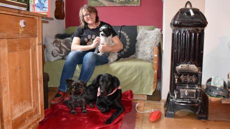 Hündin Aada (rechts unten) hat bei Manuela Meier in Neuburg ein Zuhause gefunden. Vor ihr waren bereits Yorkshire Terrier Fanni (oben) und Nené da, was anfangs zu kleinen Reibereien geführt hat. Inzwischen haben sich alle Bewohner aber gut aneinander gewöhnt.