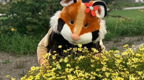 Feldhamster Fips ist das Maskottchen der Landesgartenschau.