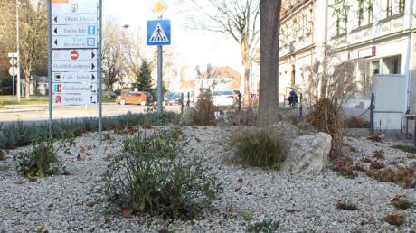 Die Grünfläche an der Neuburger Luitpoldstraße wurde umgestaltet. Doch das Ergebnis gefällt vor allem Naturschützern überhaupt nicht.