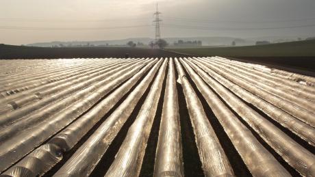 Unter der wärmenden Folie ist der Spargel herangewachsen. Im Wittelsbacher Land könnte die Ernte beginnen, doch wer macht die Arbeit?