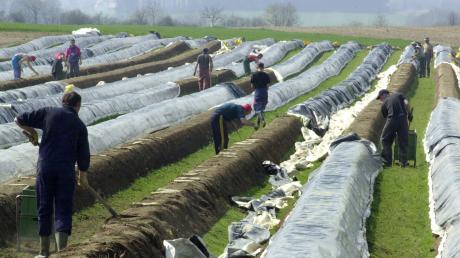 Bei der Spargelernte, wie hierin Unterbachern bei Inchenhofen im Landkreis Aichach-Friedberg, arbeiten normalerweise ausländische Saisonarbeiter.