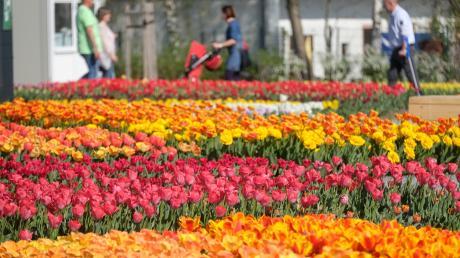 Die Landesgartenschau findet in diesem Jahr in Ingolstadt statt.