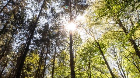 Der Gemeinderat Unterroth hat die jährliche Prüfung des örtlichen Baumbestands an eine Firma vergeben. Künftig könnte das anders ablaufen.