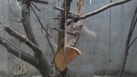 Triste Zustände im Affengehege des Zoos Wasserstern kritisieren Tierrechtler.