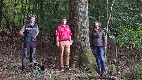 Förster Martin Spies (l.), Anton Gutjahr (Markt Burgheim) und Kathrin Selhuber von PEFC Bayern.