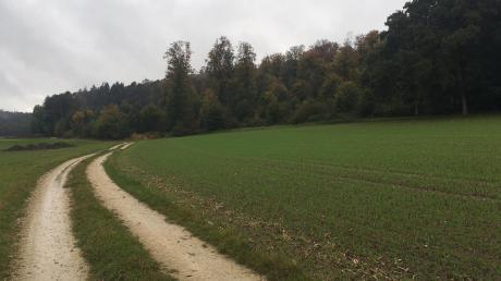 Hier am Waldrand bei Haselbach könnte der Waldkindergarten der Gemeinde Ehekirchen entstehen.