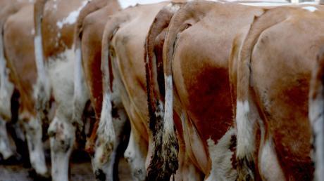 Wegen katastrophaler Zustände in seinem Kuhstall wurde ein Landwirt verurteilt.
