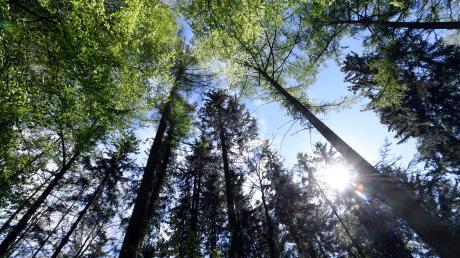 Der Klimawandel und die demographischen Veränderungen, die auch an den Waldbesitzern nicht vorbeigehen, stellen die Forstwirtschaft, Waldbesitzer und deren Selbsthilfeeinrichtungen vor drastische Aufgaben.