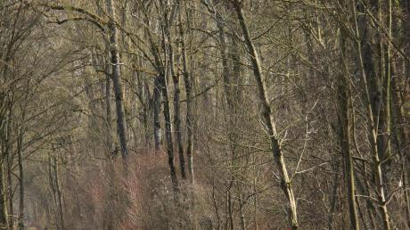 Der Weg entlang der Donau ist für Wanderer und Radfahrer nicht mehr sicher. Deshalb müssen im Zuge der Wegesicherung etwa 130 Bäume gefällt werden.