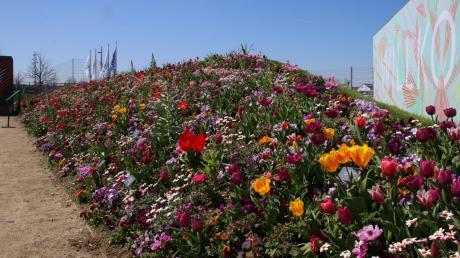 In allen möglichen Farben leuchten die verschiedenen Blumenmeere der Landesgartenschau Ingolstadt.