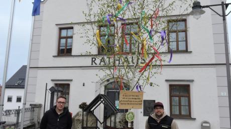 Einer von fünf Burgheimer Maibäumen steht vor dem Rathaus. Der Vorsitzende des Katholischen Burschenvereins Stefan Fieger (links), sein Stellvertreter Tobias Fischer und zehn Mitstreiter ließen den Brauch trotz Corona hochleben.