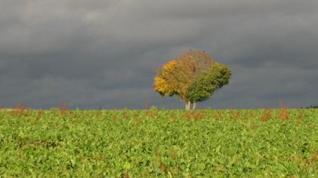 Copy%20of%20Herbstliches_Wetter_Lahuec.tif