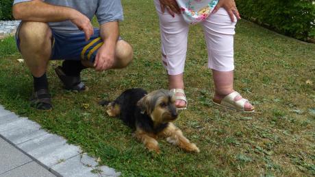 Die 15 Jahre alte Hundedame Jessy, die ihre Besitzer in den vergangenen Tagen ganz schön auf Trab gehalten hat.