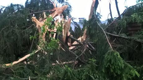 Ein Blitz ist in einen Baum eingeschlagen. (Symbolbild)